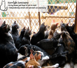 Starrlight Sanctuary--we are a subset of Joeys Feline Friends