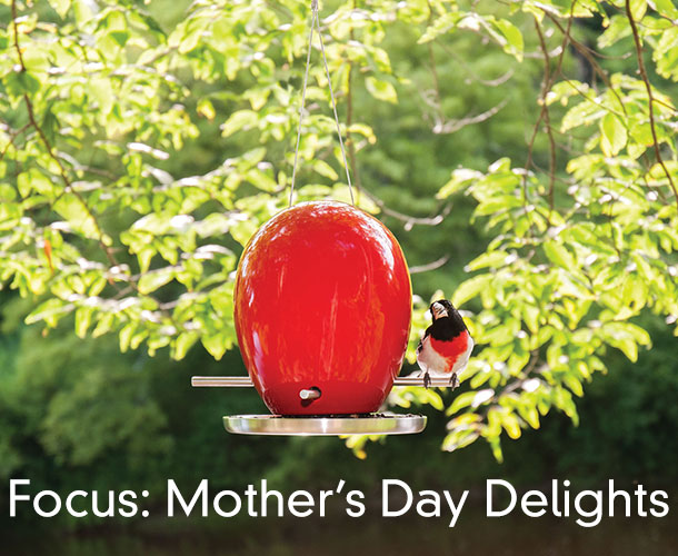 Focus: Mother's Day Delights