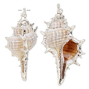 focal, murex shell (natural) and silver-plated steel, white / dark brown / light brown, 45x20mm. sold per pkg of 2.